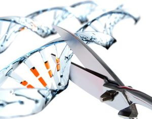 Could we be cutting and pasting our dna soon